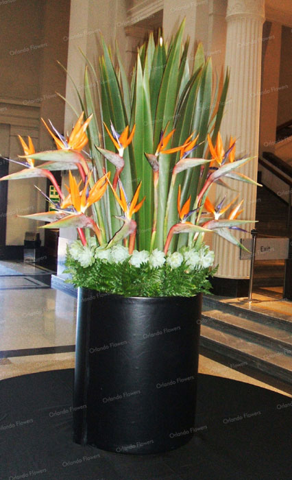 Grand Foyer Auckland Museum : Orlando flowers exclusive floral creations for weddings